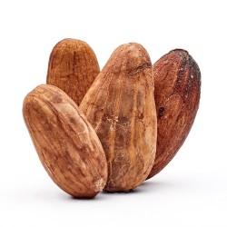56-feve-cacao-bio-04-2RR